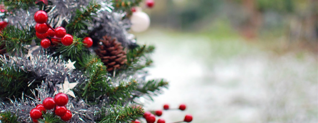 kerstboom | green and the cities